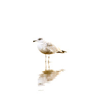 Seagull No. 1 by Cattie Coyle Photography
