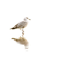 Seagull No. 2 by Cattie Coyle Photography