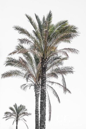 Palm Trees No. 3 by Cattie Coyle Photography