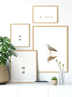 Bird photography gallery wall by Cattie Coyle Photography