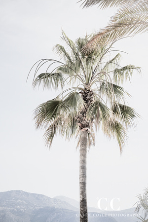 Palm Tree No 8 - Fine art print by Cattie Coyle Photography