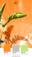 Banana Leaves and Orange Wall - Photography art print by Cattie Coyle